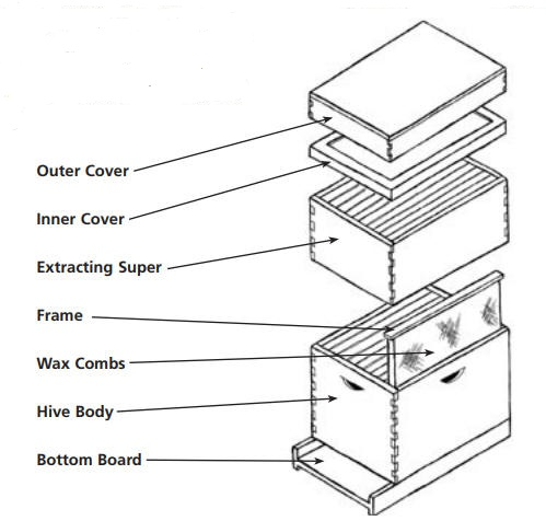 A Beekeeper S Hive Explained